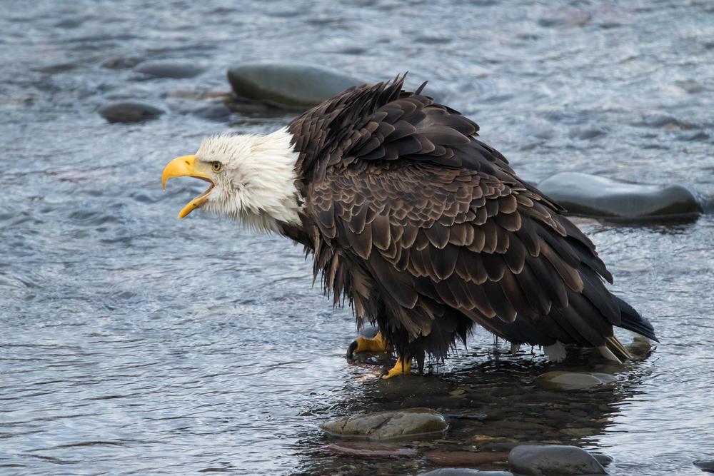 Eagle10 Web.jpg