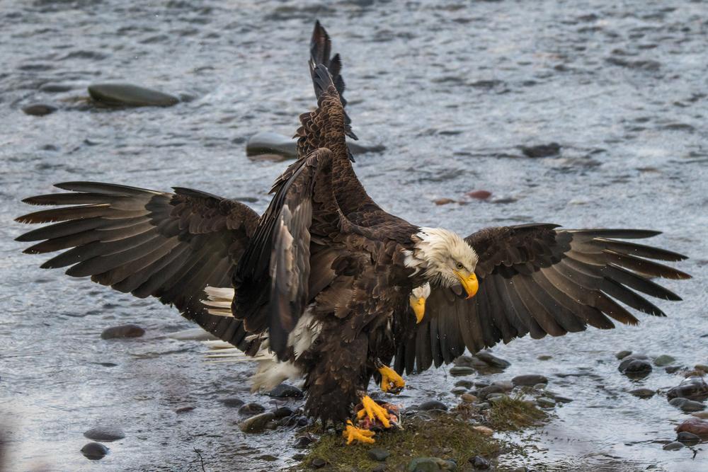 Eagle11 Web.jpg