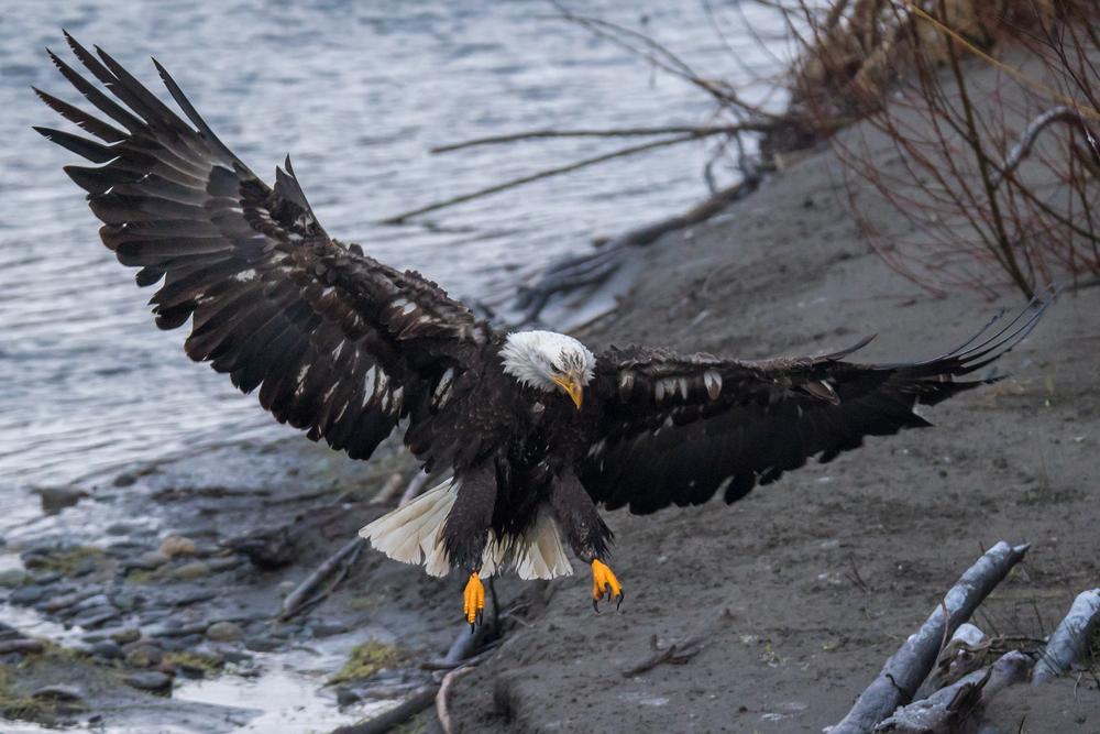 Eagle12 Web.jpg