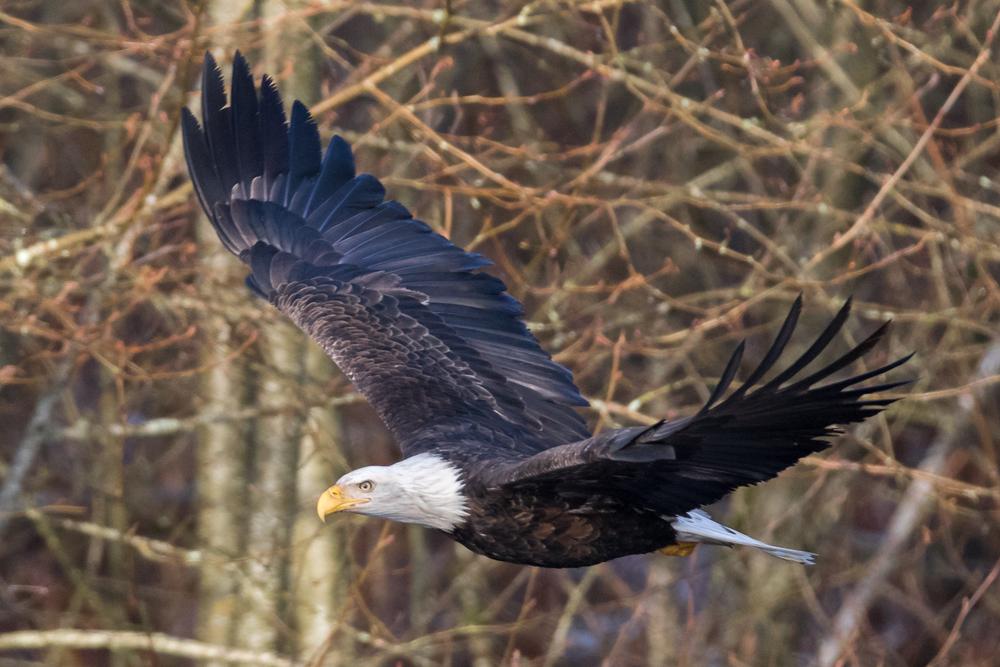 Eagle16 Web.jpg