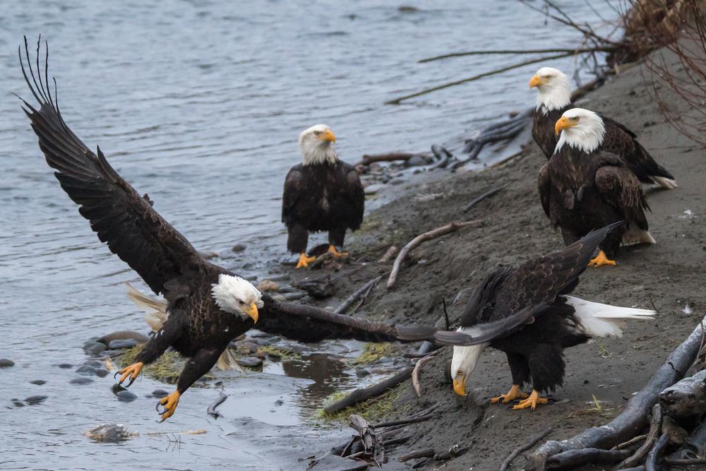 Eagle17 Web.jpg