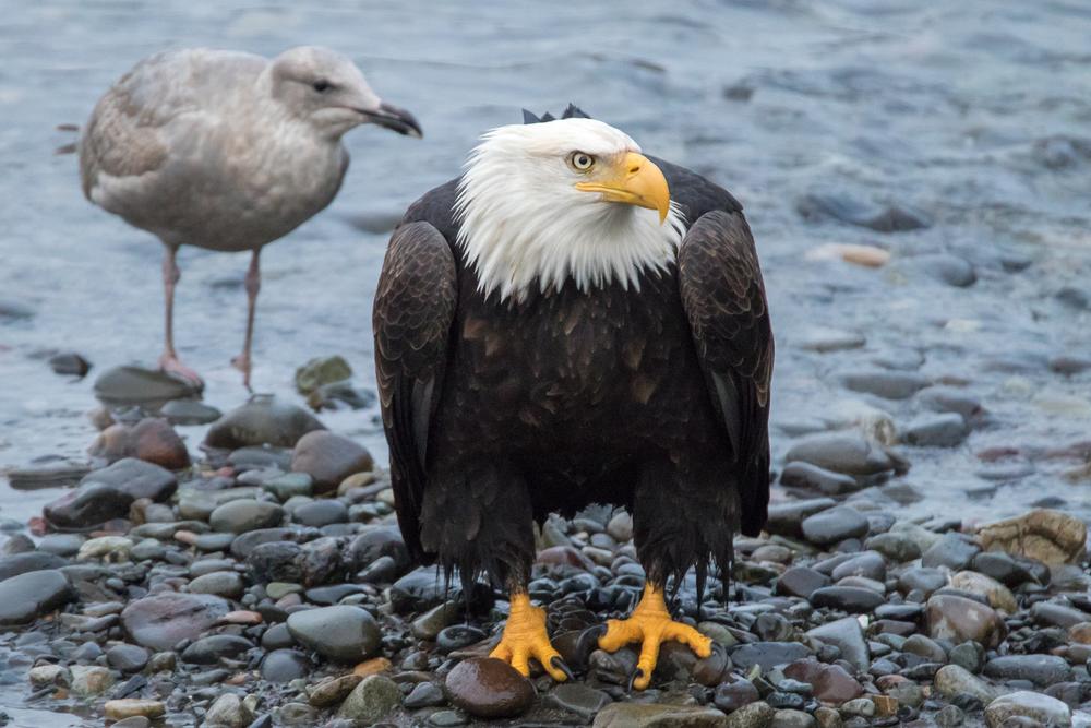Eagle18 Web.jpg