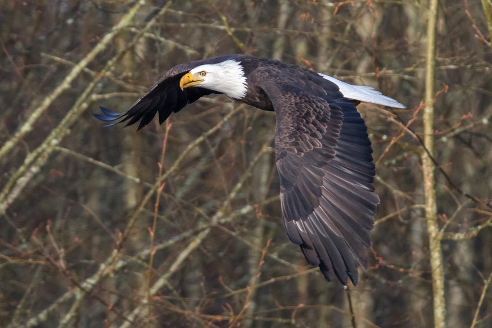Eagle19 Web.jpg