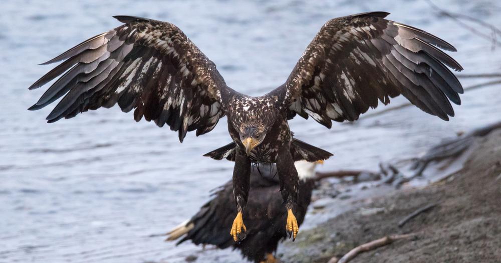 Eagle21 Web.jpg