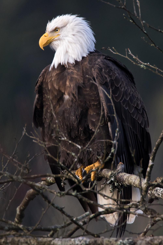 Eagle6 Web.jpg