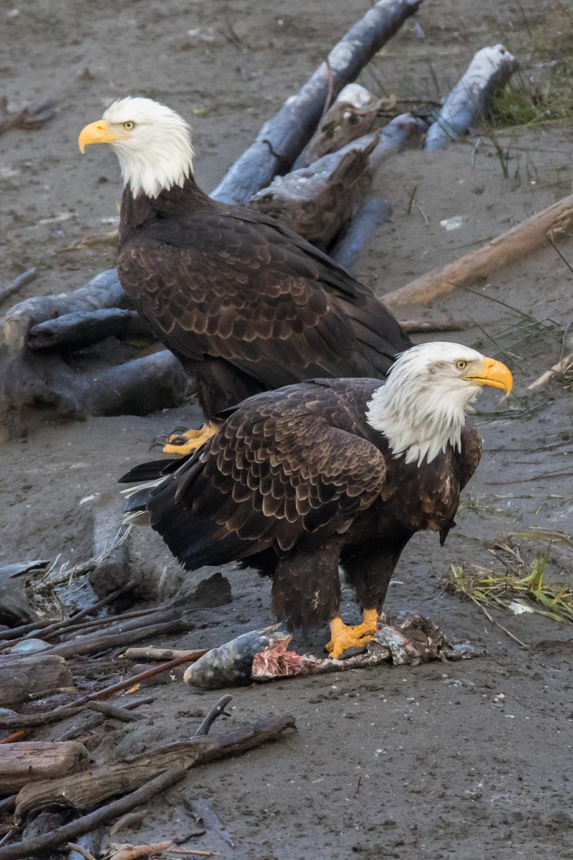 Eagle9 Web.jpg
