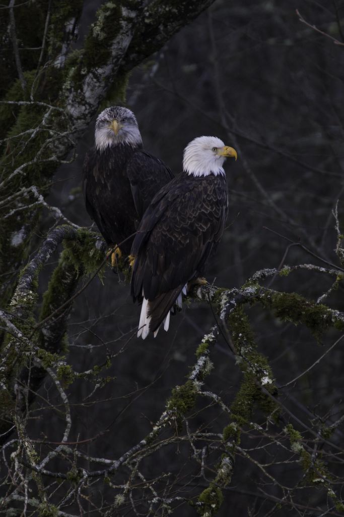 Eagle 3 Web.jpg