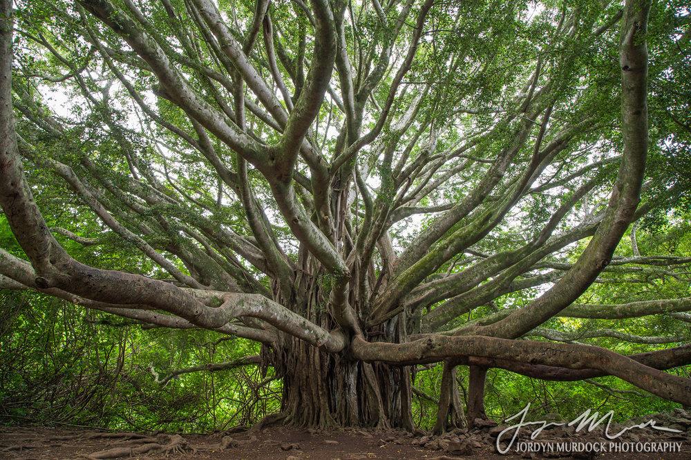 Banyan 3 Web WM.jpg