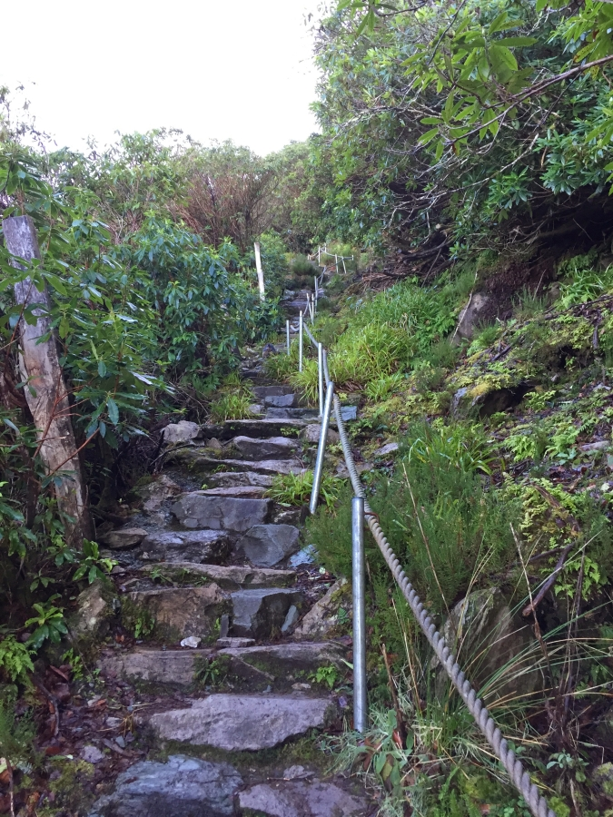 Cardiac-Steps-Torc-Mountain-Killarney.jpg