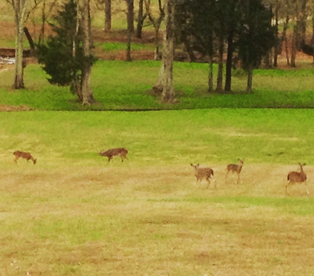 Deer, good.