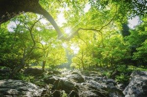 SDG Ecosystems.jpg