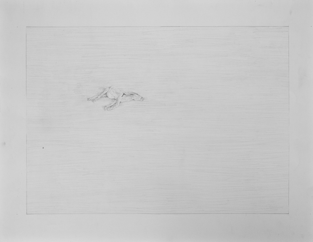 Graphite on paper  2011, 61x46cm