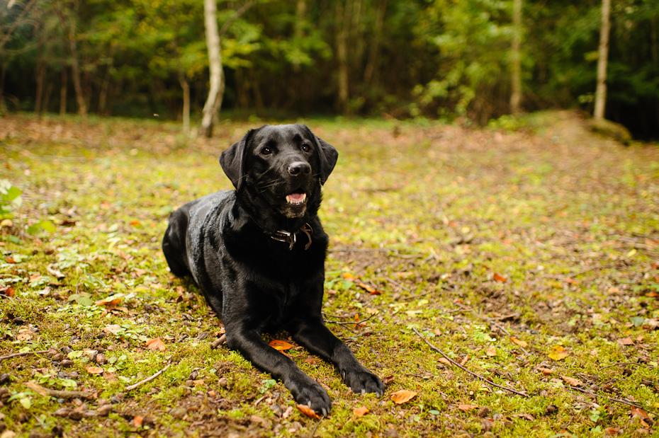 Quality Pet Photography UK