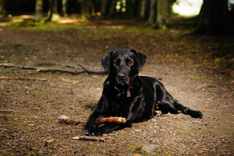 Dog Photography UK-8