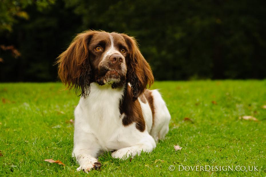 UK dog photography