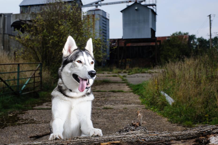 Kent Dog Photography