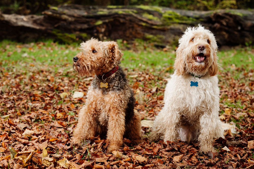Pet Photography Kent