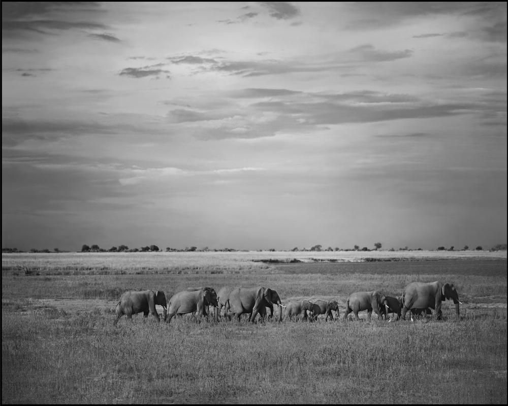 chobe herd finalw-border.jpg