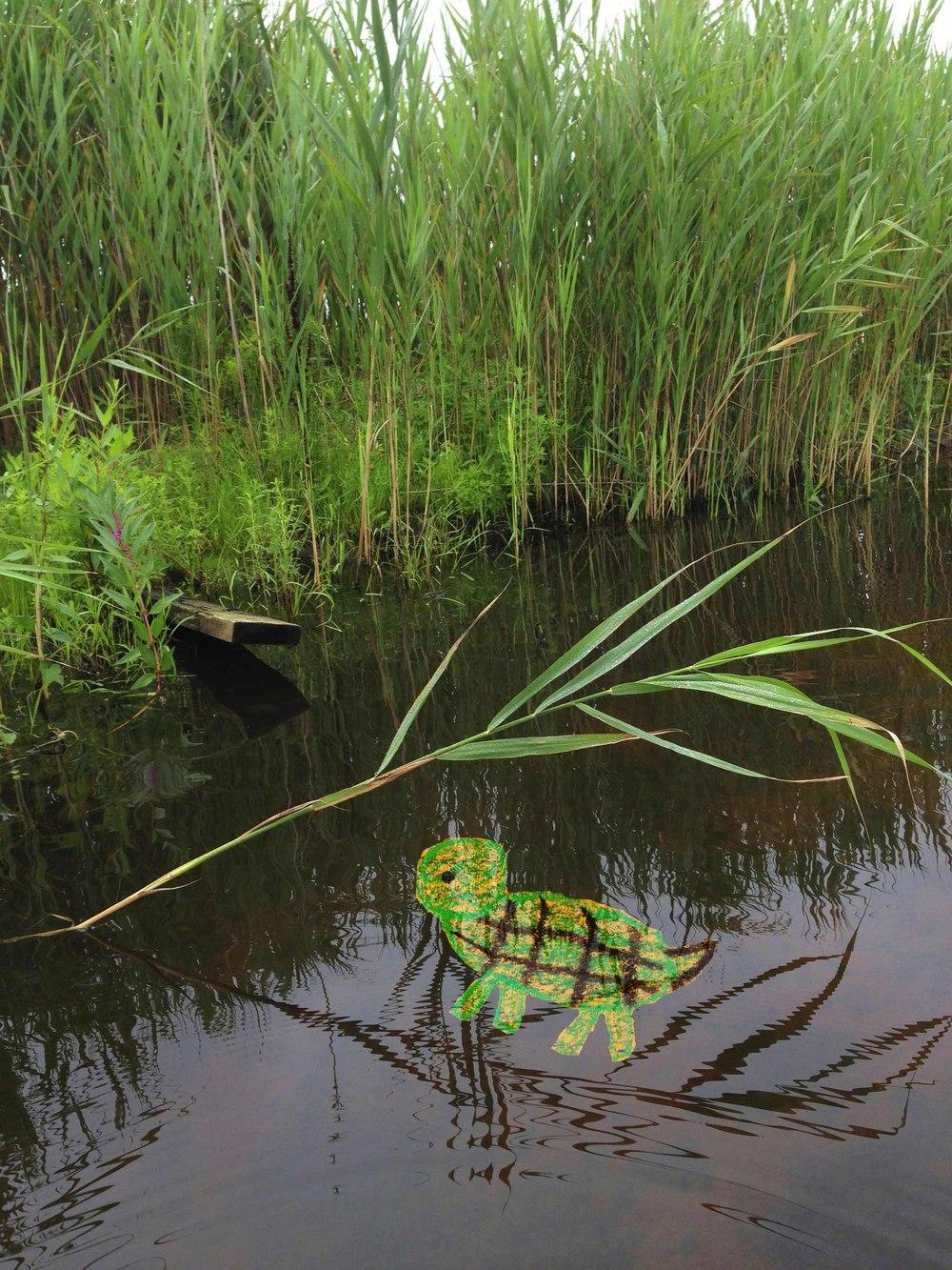 Low Res Turtle in Doctor's Creek.jpg