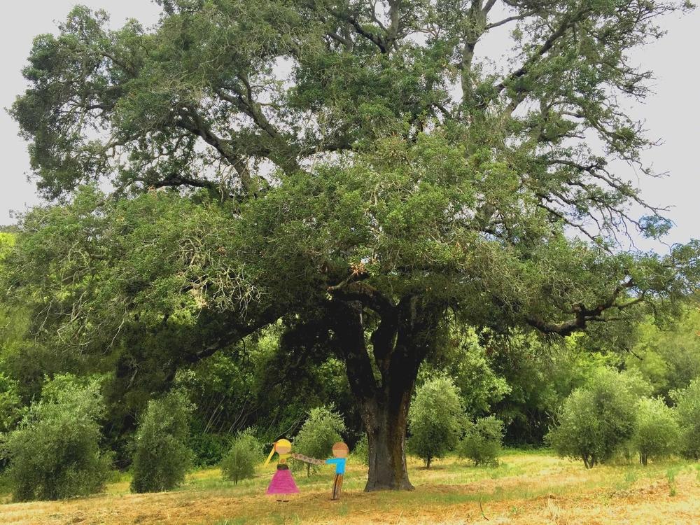 Wedding Under a Big Old Tree