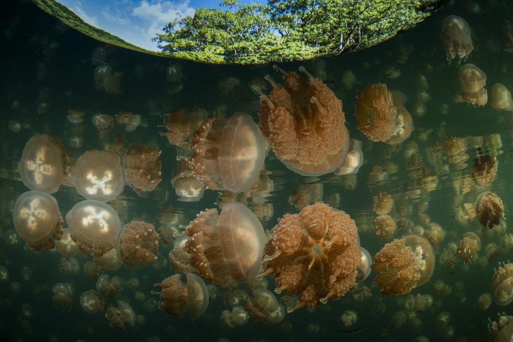 RichardBarnden_JellyfishLakeReflection.jpg