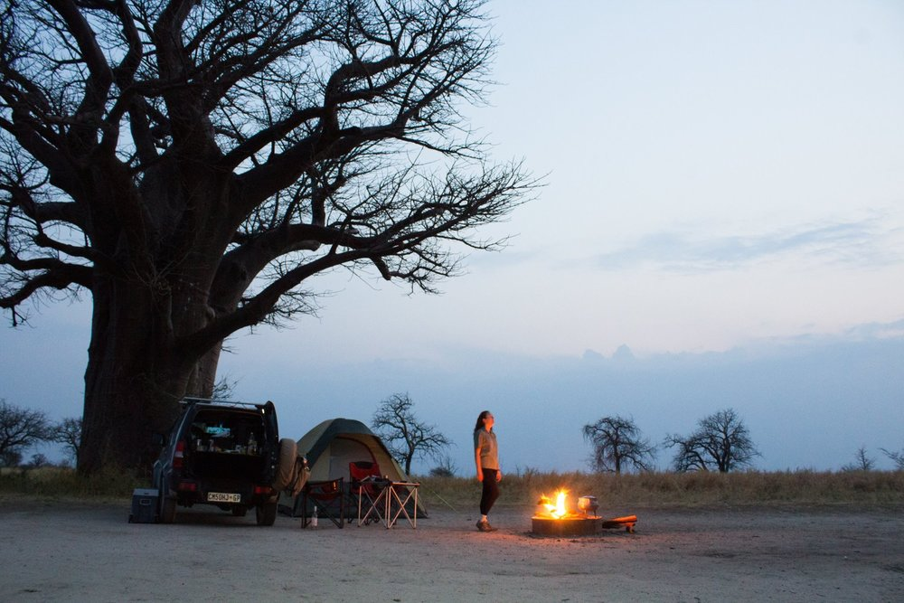 Baines' Baobabs -