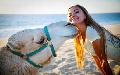 Camels_4.JPG