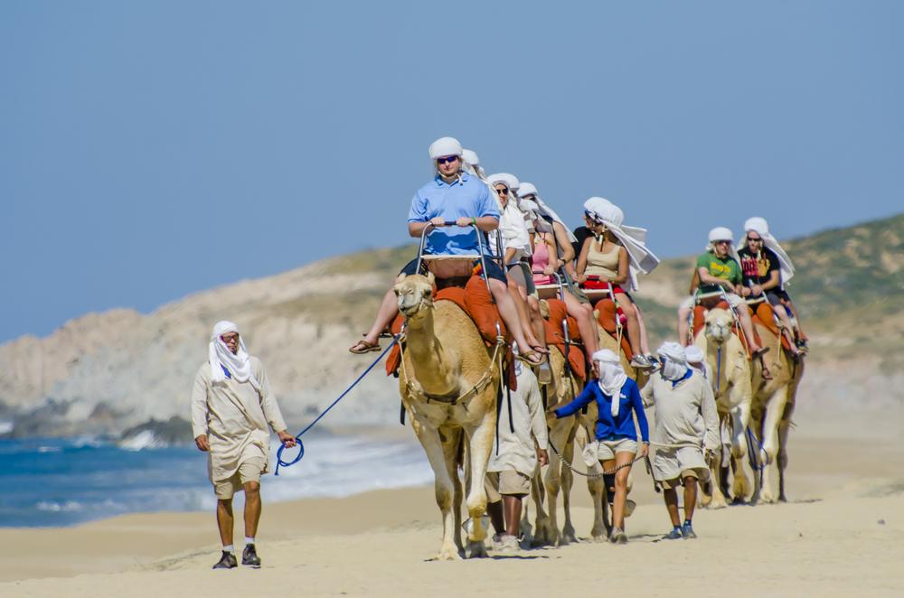 Camels_128.jpg