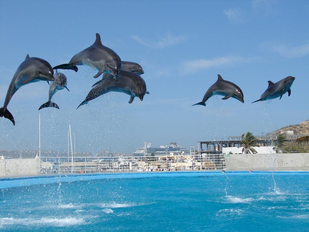 Dolphin_16.JPG