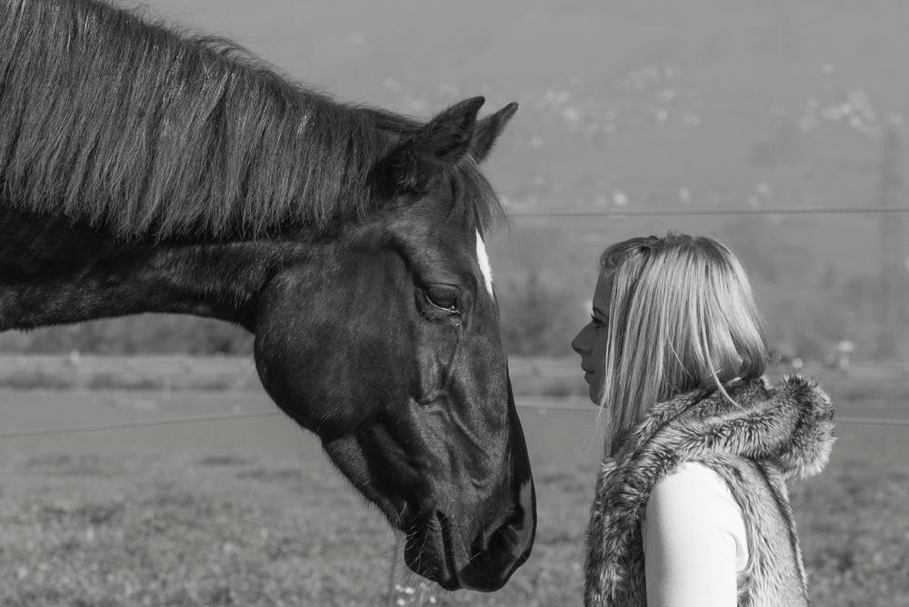Horses mehr gibt's  HIER