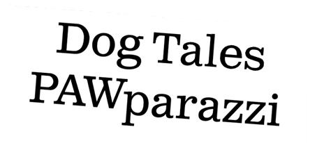 pawparazzi title.jpg