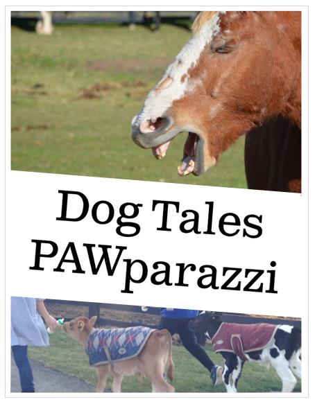 pawparazzi header new.jpg