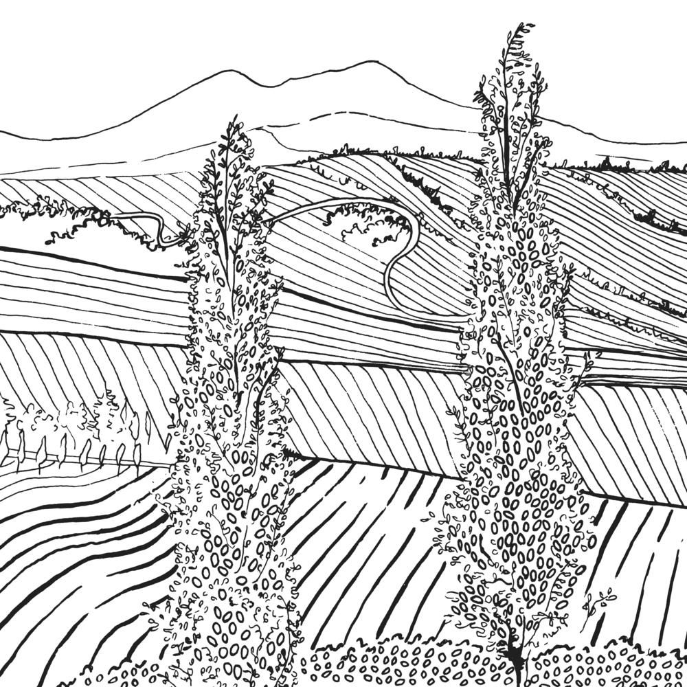 landscape - final.jpg