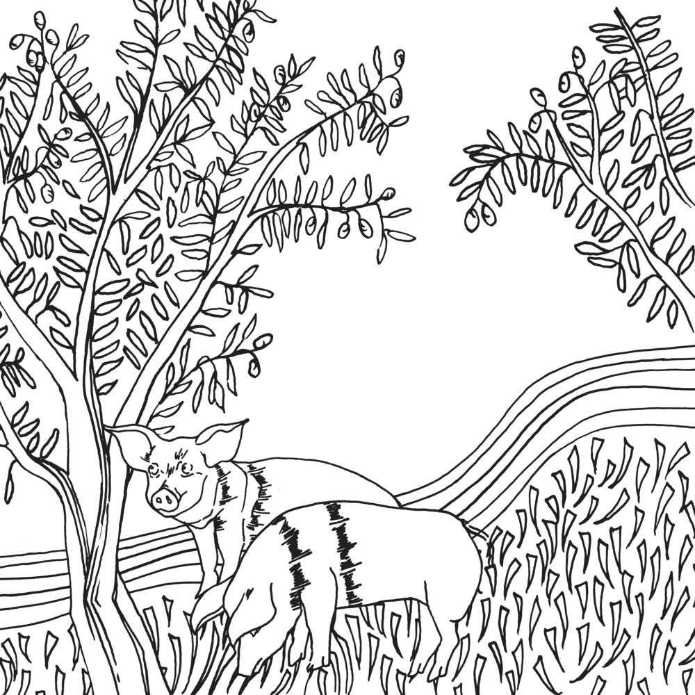 olive grove - final.jpg
