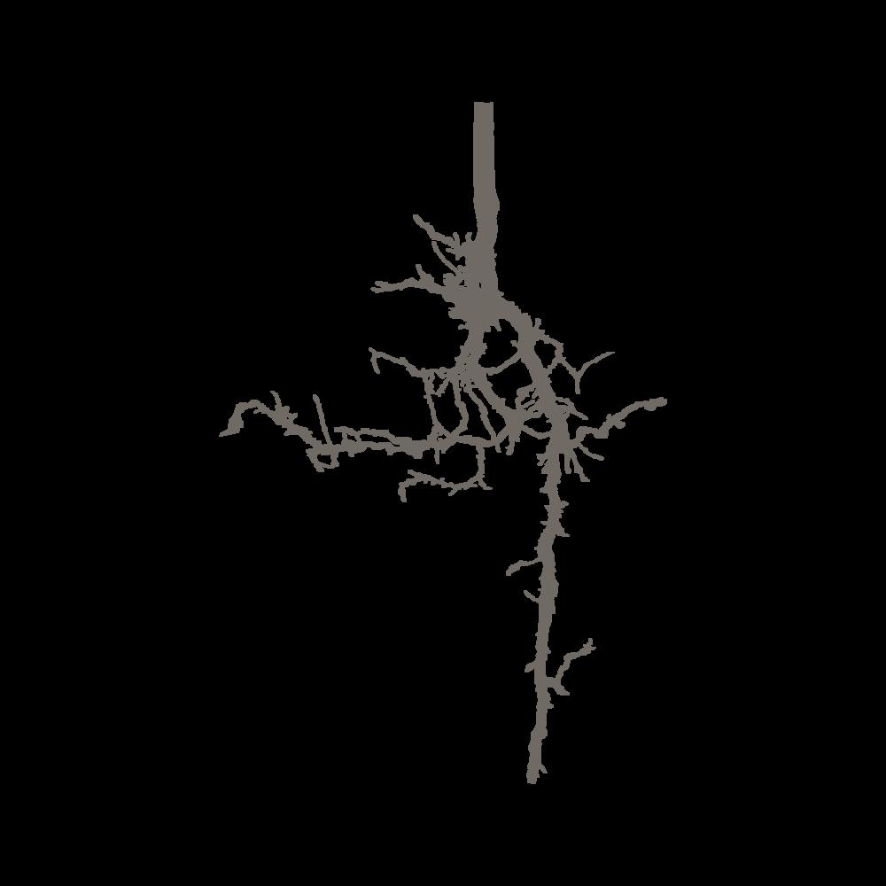 Logo brun-02.png