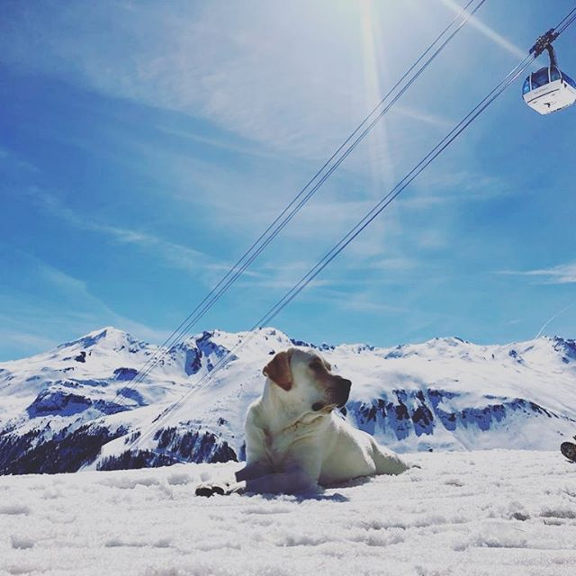 It's a dogs life!  #seasonairelife #valdisere #meribel #tignes #sunandski #holidayseason