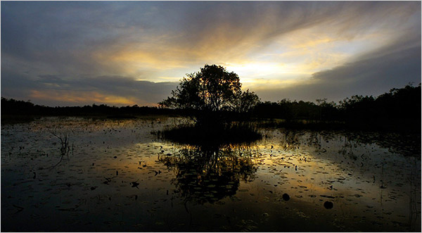 The Okfenokee Swamp, GA. where I spent much of my childhood years. Credit Stephen Morton for the NY times.