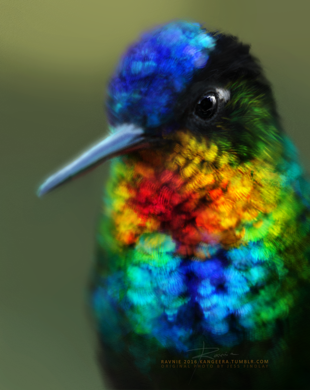bird by jess findlay.png