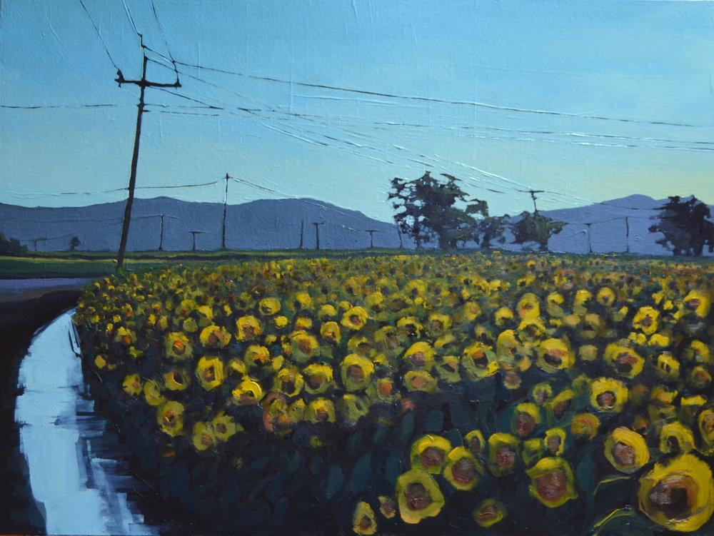 Sunflowers, Watered