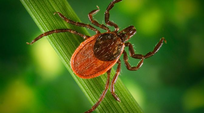 An Act relative to long-term antibiotic therapy for the treatment of Lyme disease