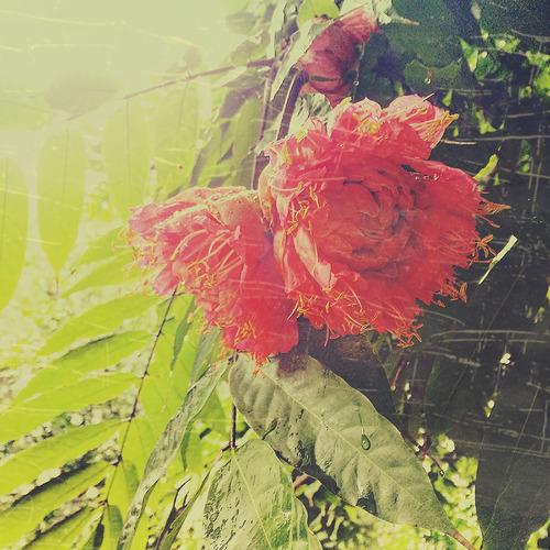 secret garden6.jpg