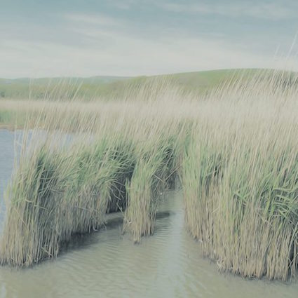 Countryside Reeds.jpg