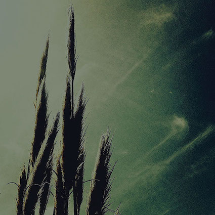 SA9 reeds.jpg