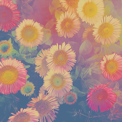 GP 5 colourful daisies.jpg
