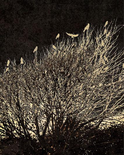 DCN 12 Crowns tree nest.jpg
