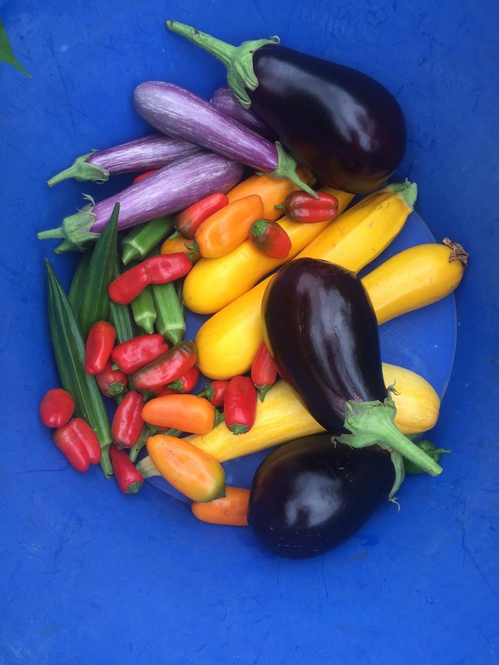 Veggie General Image.png
