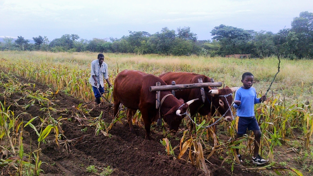Farming to create self sufficiency, practical knowledge and skills...
