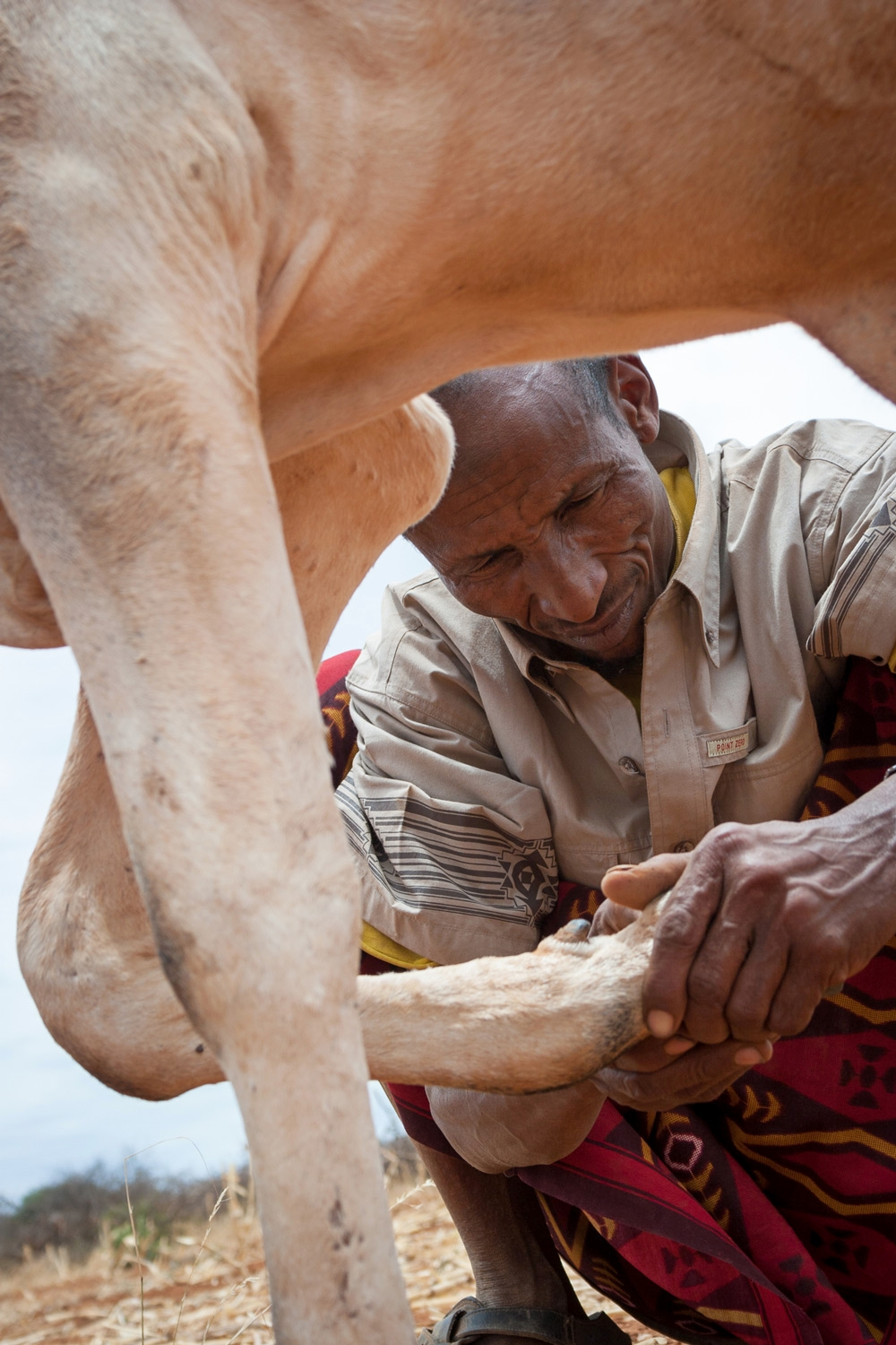 ethiopia-pastoralist-cattle-vet-animal-health-worker.jpg