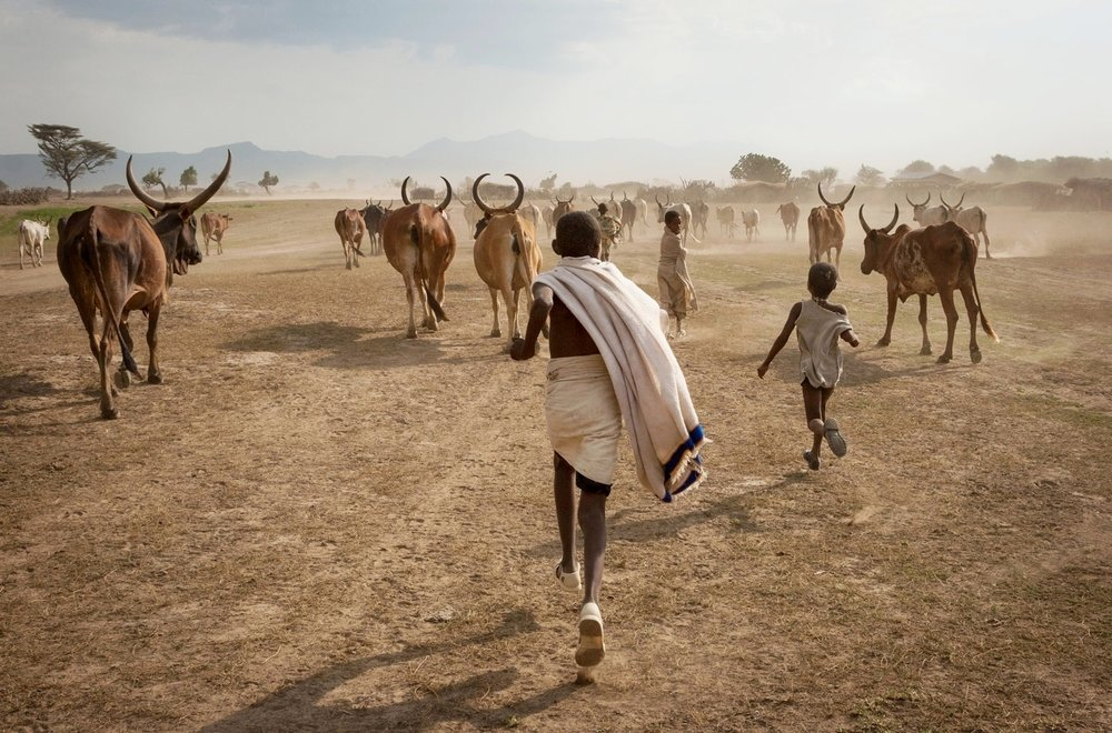 Afar-boys-run-with-cattle.jpg