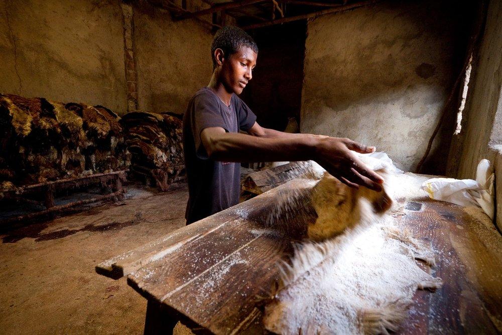 ethiopia-sheep-goat-hides-skins.jpg